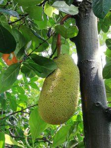 東谷山フルーツパーク~世界の熱帯果樹温室~